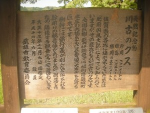 2012_05_27_川古のクス_解説
