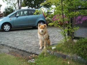 2009_04_25_犬