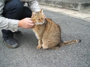 2009_04_26_佐賀_猫
