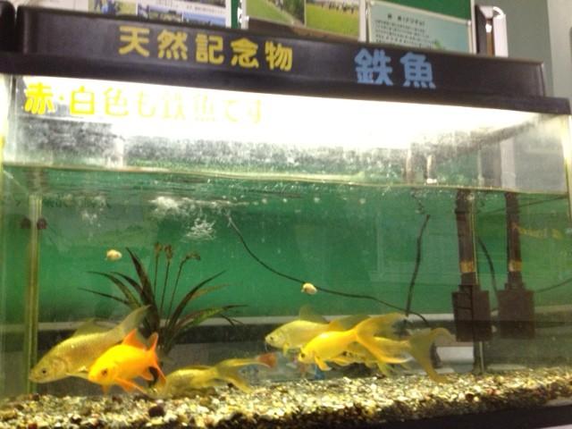 2012_11_10_古川_鉄魚