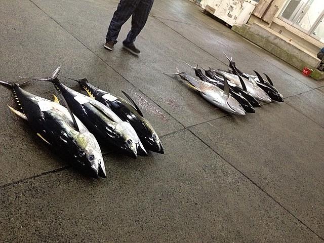 2012_12_01_奄美_漁協_キワダマグロ