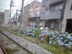 2013_06_01_世田谷線_沿線2