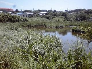 2013_07_21_ライヒー野池