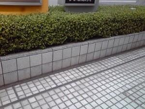 2014_05_23_国際展示場_スズメ.jpg