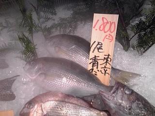2014_06_08_山助_青鯛.jpg