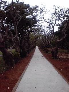 2014_06_30_01_熱帯植物園2.jpg