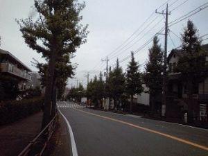 2014_11_02_01_落葉3