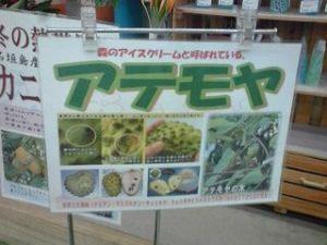 2014_12_28_02_ゆらてぃく市場_アテモヤ1