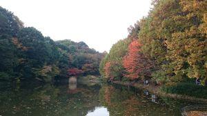 2016_11_27_01_ザリガニ池2