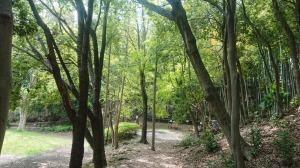 2020_04_23_03_山崎公園1.JPG