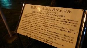 2020_07_25_02_ひんぷんがじゅまる1.JPG